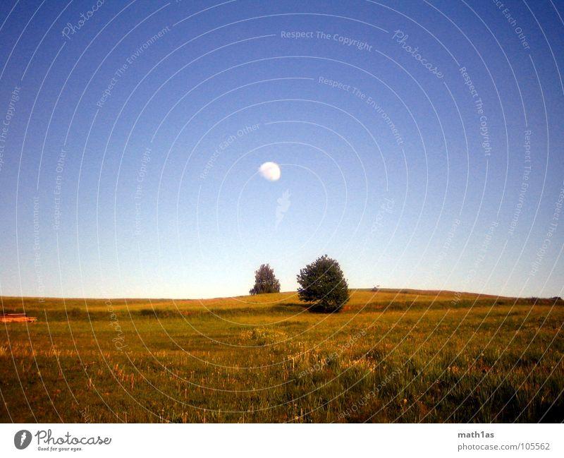 zwei+einer Baum blau Sommer gelb Herbst Wiese Gras groß Hügel Mond