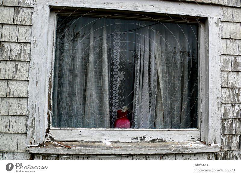 Armutsbericht Menschenleer Haus Einfamilienhaus Traumhaus Hütte Ruine Bauwerk Gebäude Architektur Mauer Wand Fassade Fenster alt sparen Vase rosa Gardine