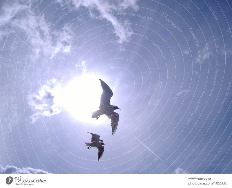 Zu zweit allein Himmel Sonne Sommer Vogel fliegen Möwe Leichtigkeit Lichtspiel