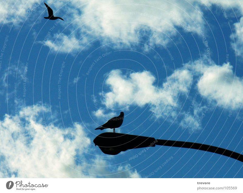 Flight Himmel blau Ferien & Urlaub & Reisen Tier Ferne Lampe Erholung Freiheit Vogel frei sitzen Luftverkehr liegen Kanada Straßenbeleuchtung