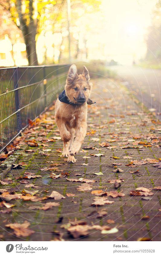 Run Boy Hund Freude Tier Tierjunges Gefühle Glück Stimmung Zufriedenheit Fröhlichkeit Lebensfreude Fell Haustier Frühlingsgefühle Tierliebe