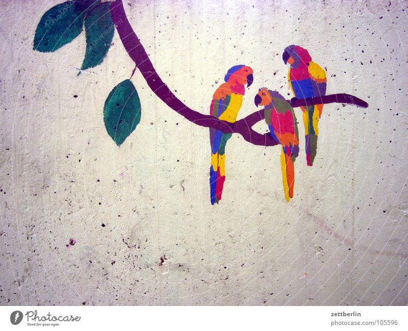 Papageien Wand Vogel Beton Dekoration & Verzierung Ast Gemälde Urwald exotisch Zeichnung Papageienvogel Alaska Wanddekoration Kinderzeichnung Bildende Kunst