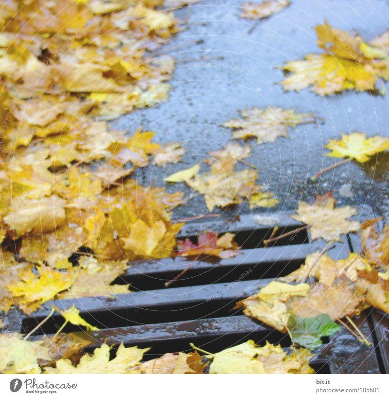 RUTSCHGEFAHR blau Winter Blatt gelb Straße kalt Herbst nass Verkehrswege tief Gully Kanalisation
