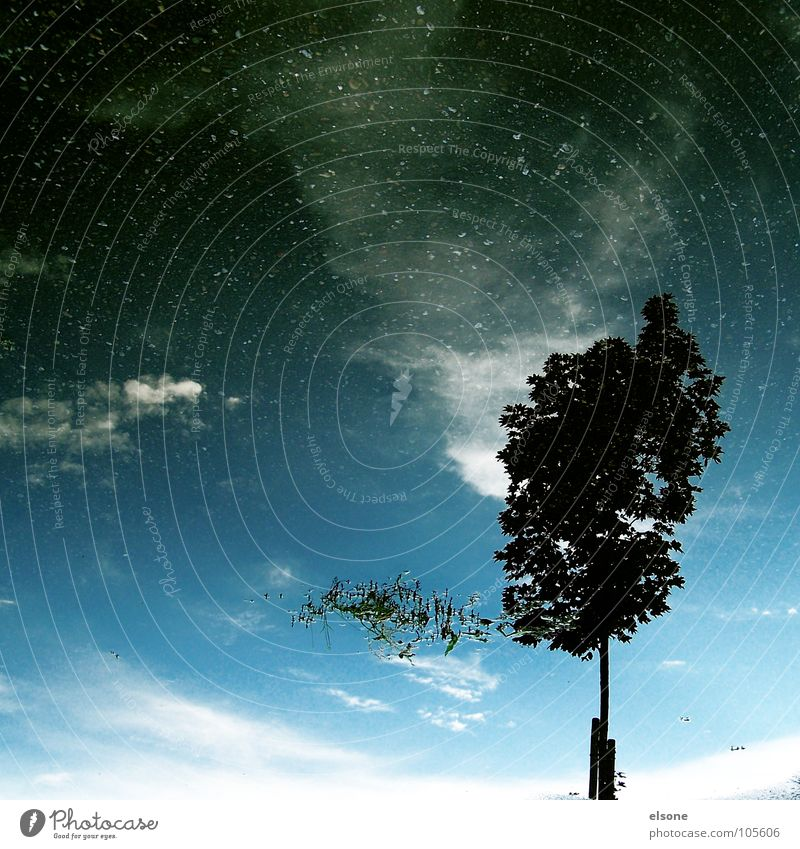 ::::die ruhe NACH dem sturm:::: Wasser Himmel weiß Baum blau Pflanze ruhig schwarz Wolken Einsamkeit Straße dunkel Regen Graffiti hell Stern