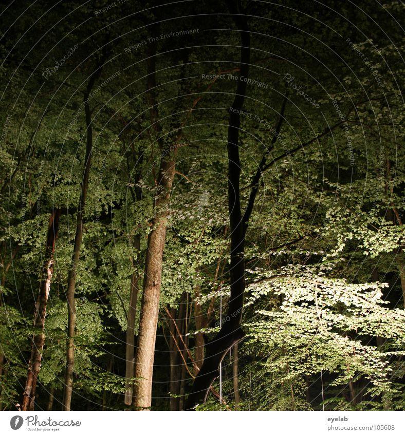 Dem Waldgeist geht grad ein Licht auf Baum Blatt Sommer Herbst Nacht dunkel glänzend Erkenntnis unheimlich erleuchten Holz Unterholz gruselig Dreharbeit seltsam