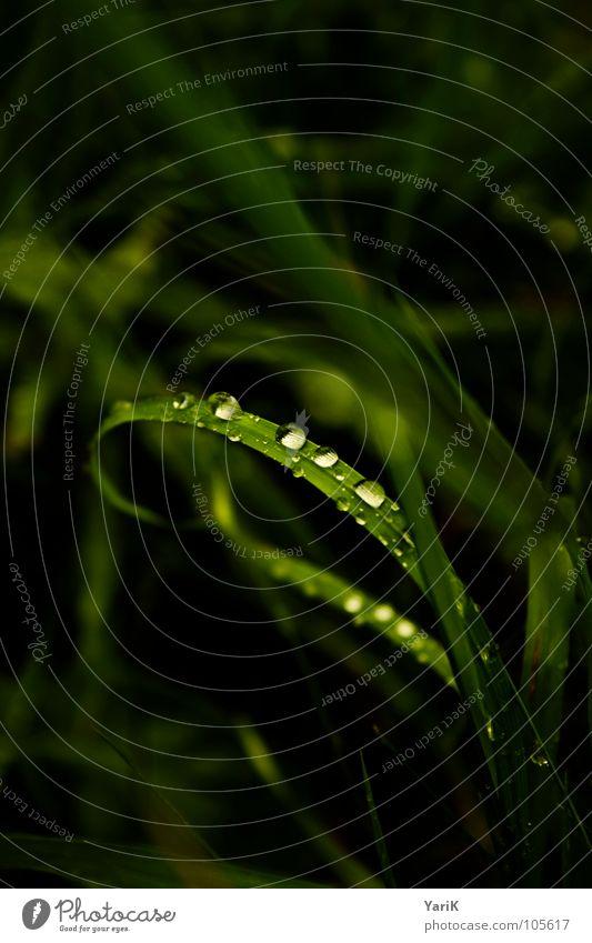 tropfnass I grün Wasser Gras Regen Wassertropfen Brücke Punkt Kugel Halm