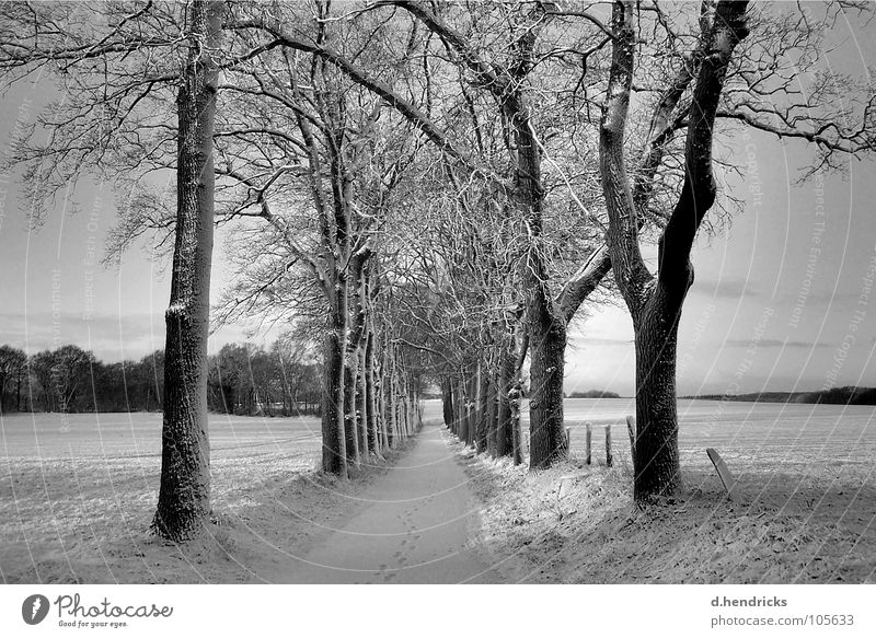 winter silence Natur Winter trees snow street black white footsteps
