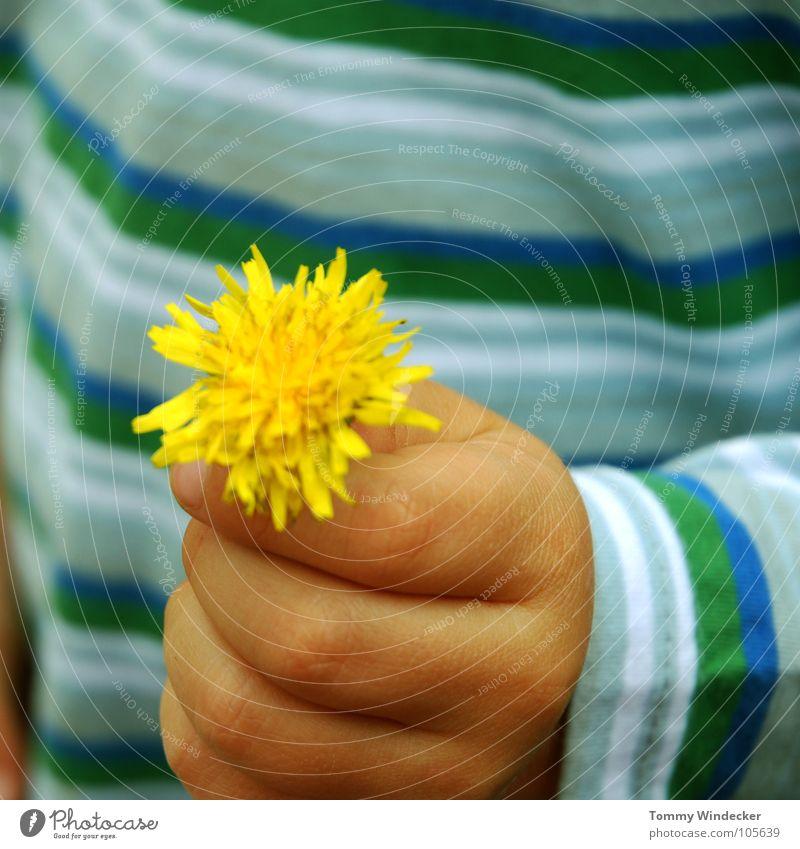 Blumenkind kindlich Spielen Löwenzahn Pflanze Hand Kinderhand Finger gelb Neugier untersuchen Muttertag Geschenk schenken Mutterliebe Vatertag Bildung