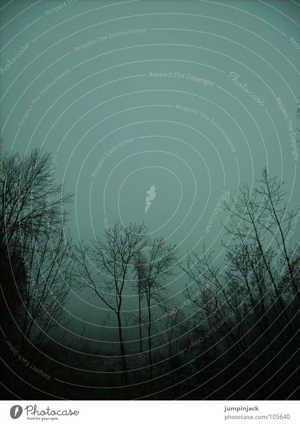 im schlumperwald Himmel Baum Winter dunkel kalt Herbst Nebel Horizont Vergänglichkeit Zweig mystisch