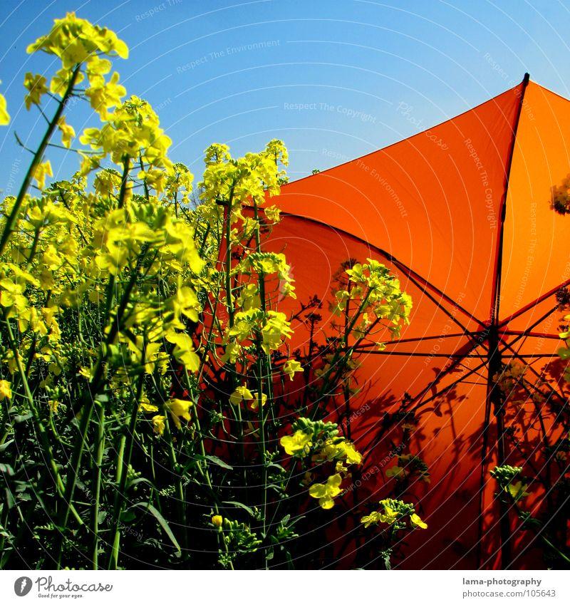 Quadratisiert Blume blau Pflanze Sommer Freude Ferien & Urlaub & Reisen ruhig Wolken gelb Farbe Erholung Wiese springen Blüte Frühling Freiheit
