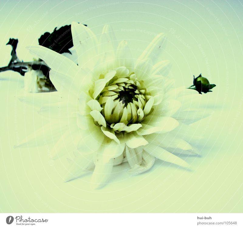 It smells.. Blume Blüte Einsamkeit Umwelt Umweltschutz Baum Wiese Sträucher Wachstum groß prächtig dreckig grau gelb schön ruhig Flüstern Kostbarkeit Blühend