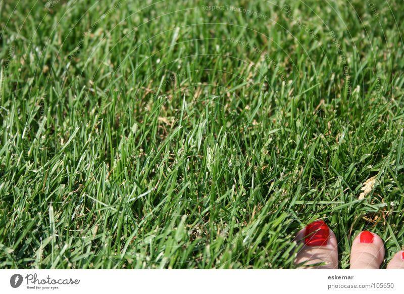 rot-grün Koalition Gras Wiese Pflanze Frau feminin Zehen lackiert Zehennagel Kontrast Sonnenbad Sommer Ferien & Urlaub & Reisen Pause Kur Mittagspause