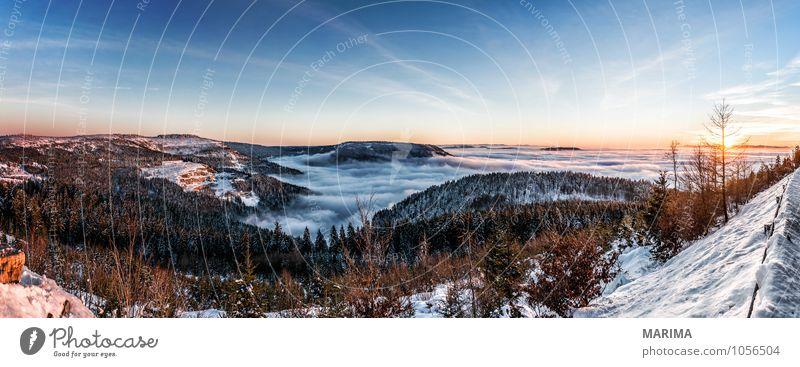 winter hike in the northern Black Forest on a sunny day ruhig Tourismus Winter Berge u. Gebirge Umwelt Natur Landschaft Wolken Baum Wald Hügel kalt grau schwarz