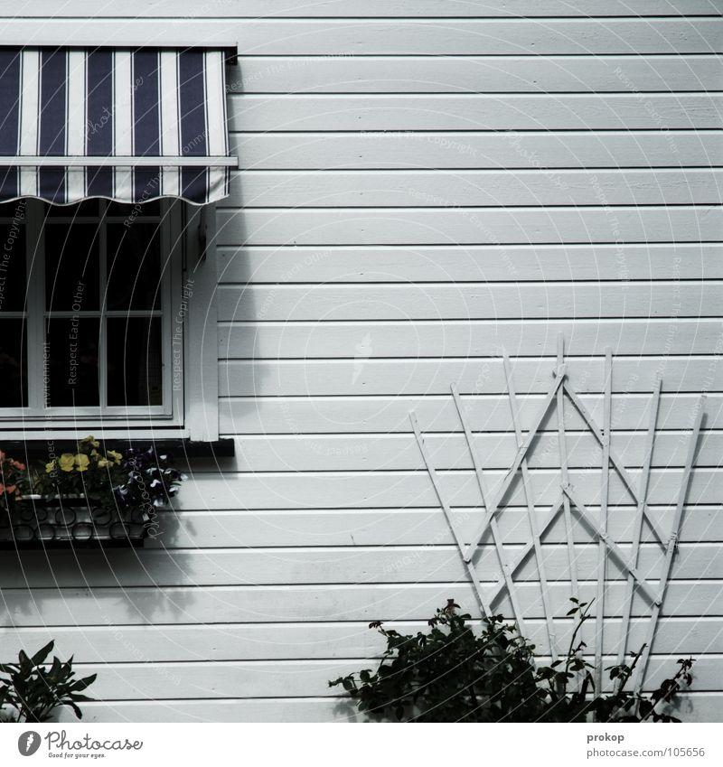 Kontoauszug Sauberkeit aufräumen steril rein penibel gepflegt Haus Einfamilienhaus Fenster reich Reichtum Kissen-Primel Blumenbeet Blumenkasten Streifen kariert