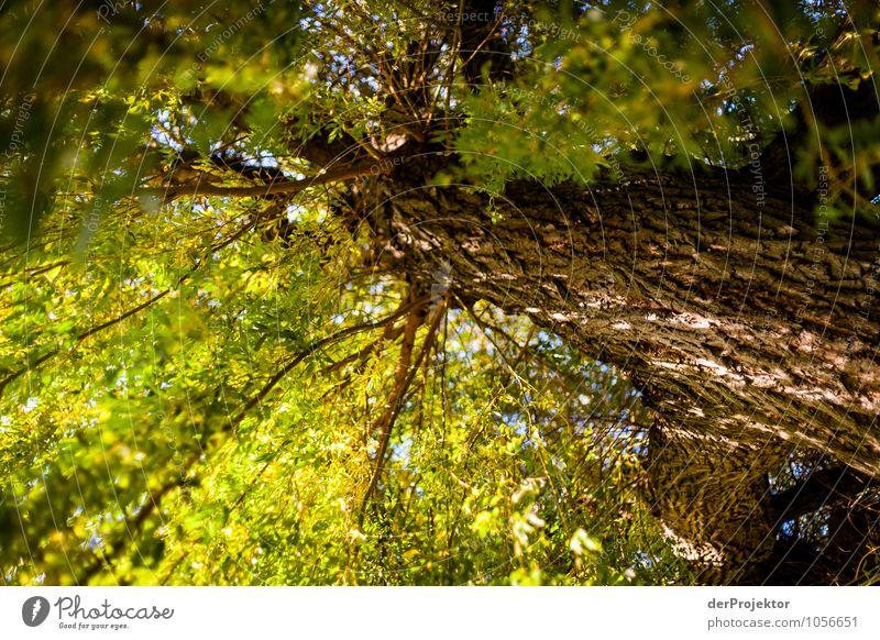 Blick in den Wipfel Natur Ferien & Urlaub & Reisen Pflanze schön Baum Landschaft Freude Tier Ferne Umwelt Gefühle Herbst Glück Freiheit Park Tourismus