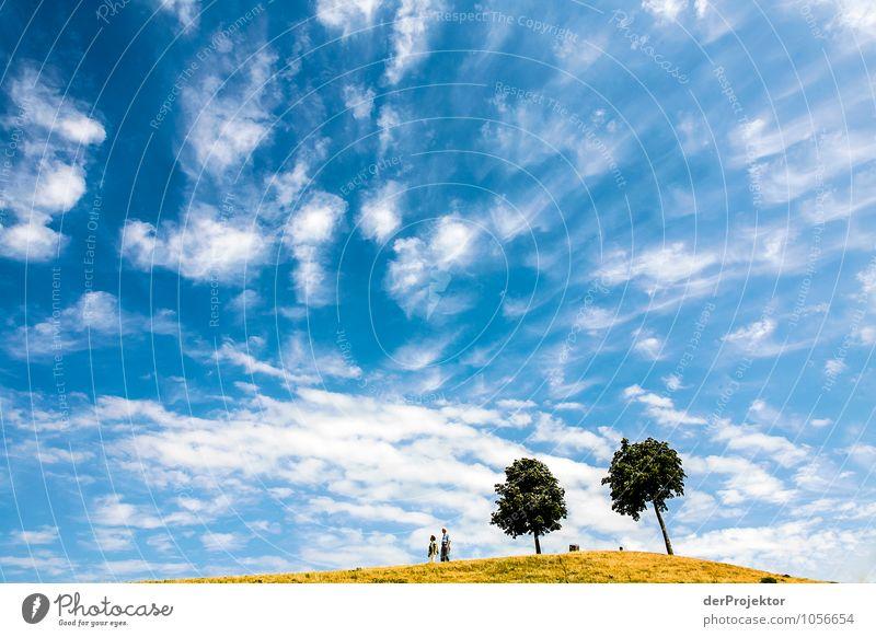 Ach so sieht blauer Himmel aus Natur Ferien & Urlaub & Reisen Pflanze Sommer Baum Erholung Landschaft Freude Umwelt Gefühle Wiese Gras Freiheit Garten Park