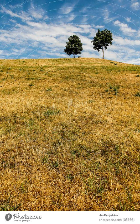 Heißer Sommer auf dem Mount Klotz V Natur Ferien & Urlaub & Reisen Pflanze Baum Landschaft Wolken Ferne Berge u. Gebirge Umwelt Wiese Freiheit Park