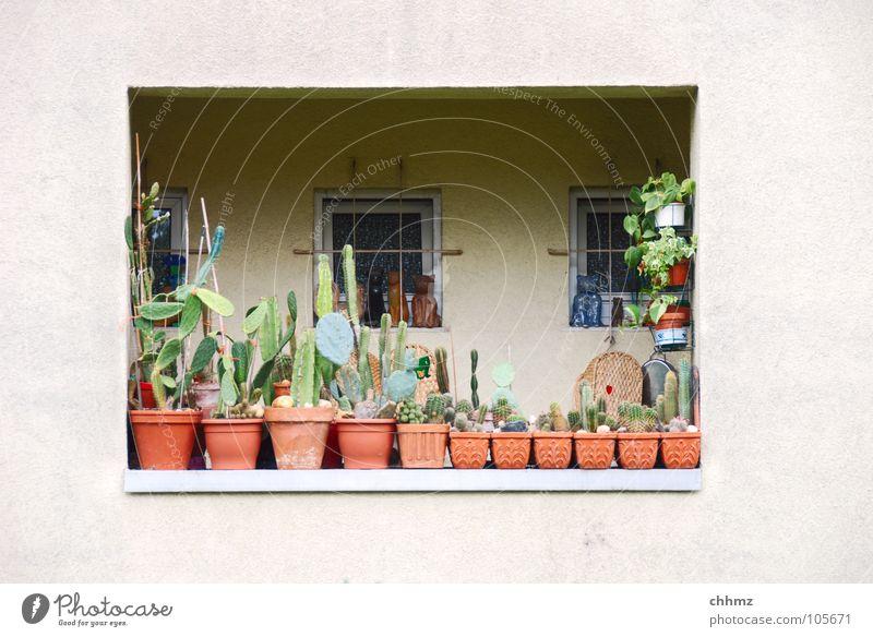 Balkonien I Blume Ferien & Urlaub & Reisen Fenster Wohnung Fassade trist Dekoration & Verzierung Häusliches Leben Idylle Balkon Geländer Putz Kaktus Versteck Blumentopf Loggia