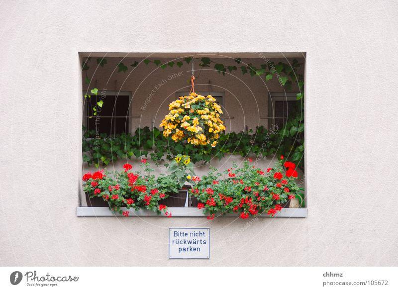 Balkonien II Loggia Ferien & Urlaub & Reisen Blumentopf Fenster Schattendasein Kaktus Geländer Blick Fassade Wohnung Putz Pelargonie Ampel Blüte Idylle