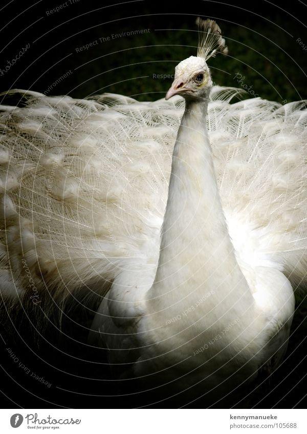Fashion Show Vogel Körperhaltung Zoo Indonesien Tier Bali