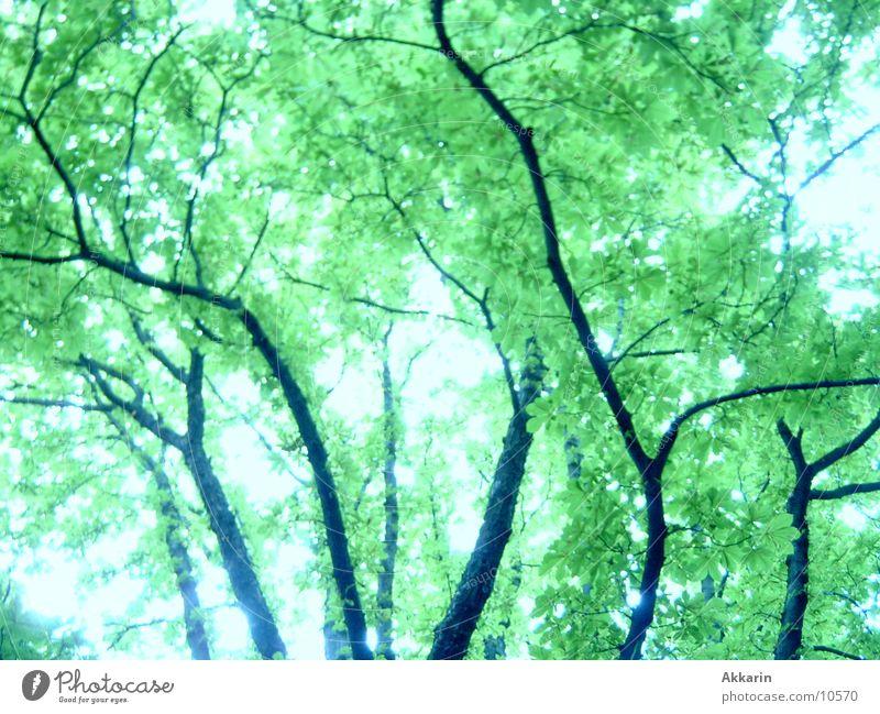 Blätterwald Blatt Wald Ast Baumstamm Baum Blätterdach