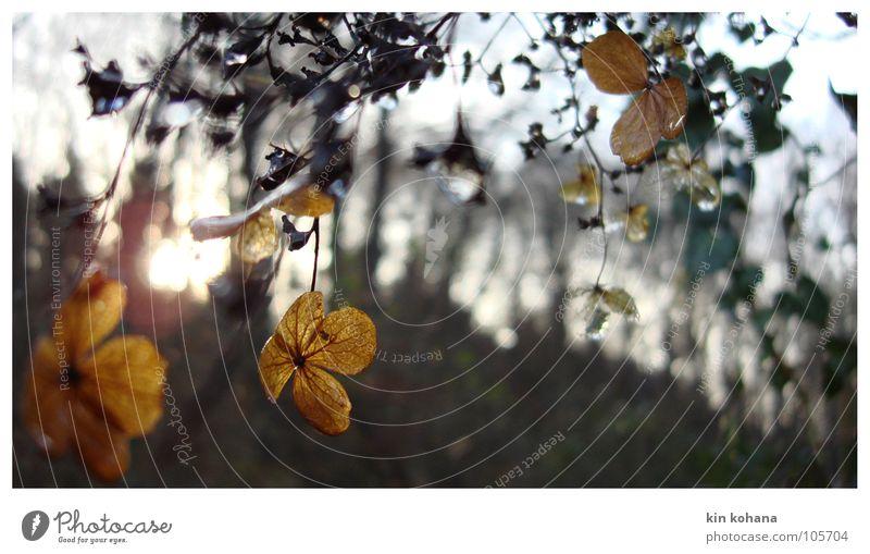 lichtspiele alt Sonne Winter Blatt gelb Wald kalt Herbst Blüte Erde Vergänglichkeit zart verfallen durchsichtig Lichtspiel
