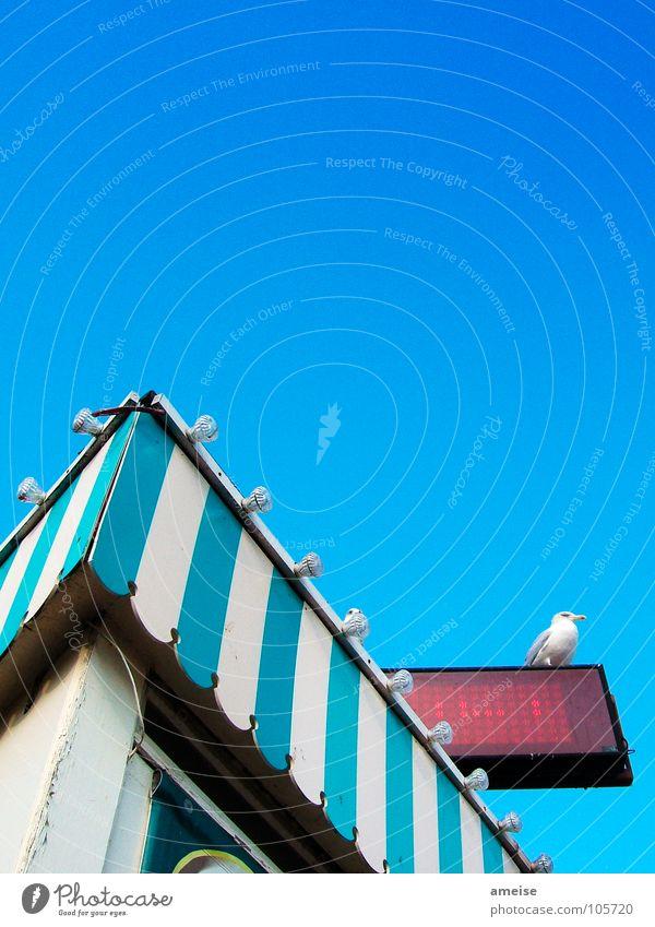 Was für ein Himmel blau Schönes Wetter Hafen Gastronomie türkis Möwe Ladengeschäft Glühbirne England Blauer Himmel Dock