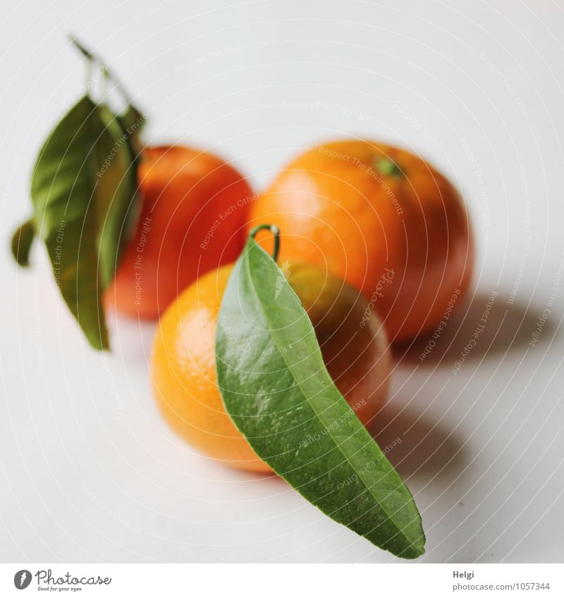 Vitamine... grün weiß Blatt natürlich Gesundheit Lebensmittel liegen orange Frucht frisch ästhetisch Ernährung Lebensfreude süß rund lecker