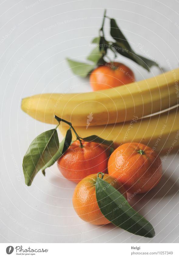 Obsttag... grün weiß Blatt gelb natürlich Gesundheit Lebensmittel liegen orange Frucht frisch Ernährung Lebensfreude einzigartig rund lecker