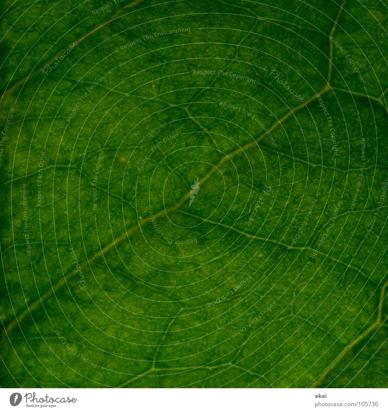 Das Blatt 18 Natur grün Baum Pflanze Umwelt Leben Garten Park Hintergrundbild Kraft geschlossen Sträucher Ast nah Urwald