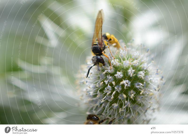 Flotte Wespe Natur Pflanze schön Sommer Blume Tier Blüte Essen Garten fliegen Wildtier Flügel Blühend Schönes Wetter berühren violett