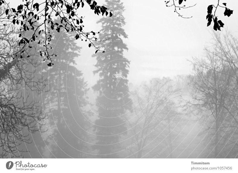 Graugraugrau. Natur Pflanze Baum Blatt Landschaft Winter schwarz Wald Umwelt Gefühle natürlich Nebel ästhetisch Ast Hügel
