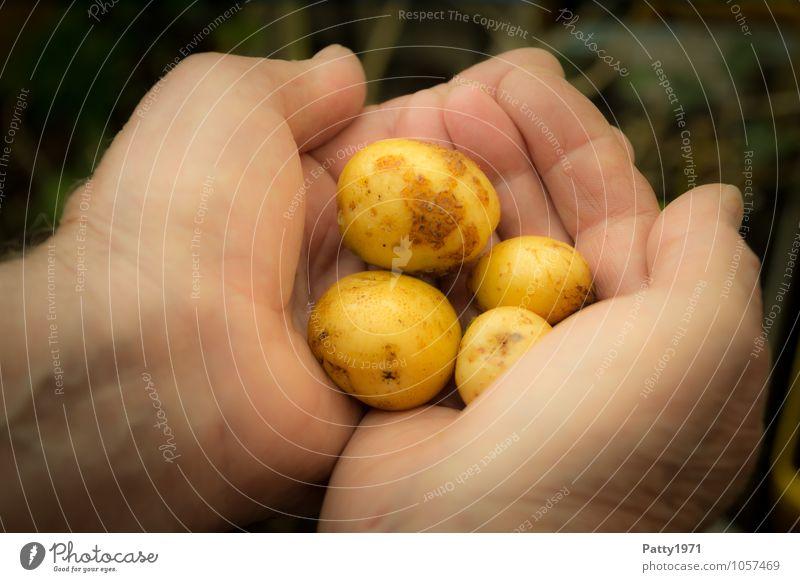 Für eine Hand voll Kartoffeln Lebensmittel Gemüse Schrebergarten Gartenarbeit Landwirtschaft Forstwirtschaft Ernte Kartoffelernte maskulin festhalten Gesundheit
