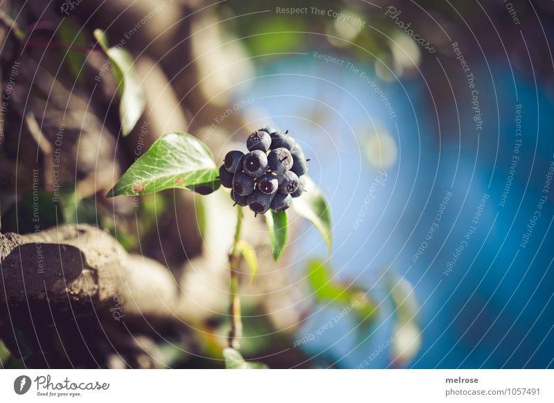 blue berries Stil Natur Himmel Frühling Baum Blüte Wildpflanze Beeren Blätter Baumstrunk Zweige u. Äste Flussufer Unschärfe atmen Blühend entdecken Erholung