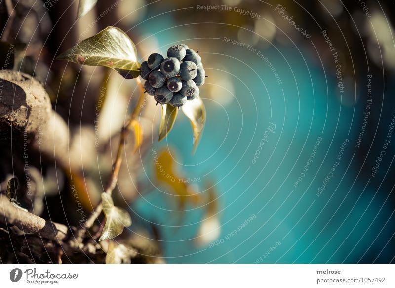 Sonnenanbeterinnen Himmel Natur schön Baum Erholung Umwelt Blüte Frühling Stil braun glänzend leuchten Idylle elegant gold Fröhlichkeit