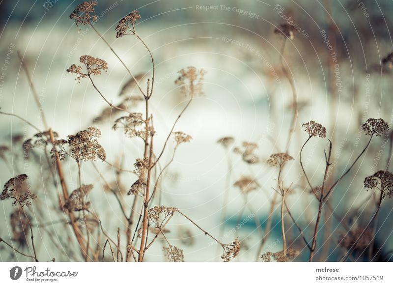 Wintergräser Natur Pflanze weiß Erholung Einsamkeit Landschaft ruhig kalt Gras Stimmung braun Idylle Zufriedenheit Sträucher genießen