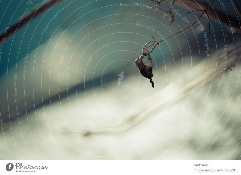 Blatt mit Durchblick Natur Landschaft Himmel Winter Schönes Wetter Schnee Sträucher Zweige u. Äste Feld Loch entdecken Erholung hängen Traurigkeit verblüht