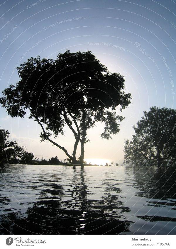 Sonnenuntergang auf Bali Wasser Baum Ferien & Urlaub & Reisen Erholung Indonesien