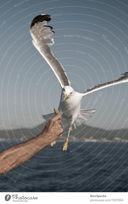 Gib schon her Mensch Ferien & Urlaub & Reisen Mann Sommer Hand Tier Erwachsene fliegen Vogel Arme ästhetisch Geschwindigkeit Ausflug Flügel Möwe fliegend