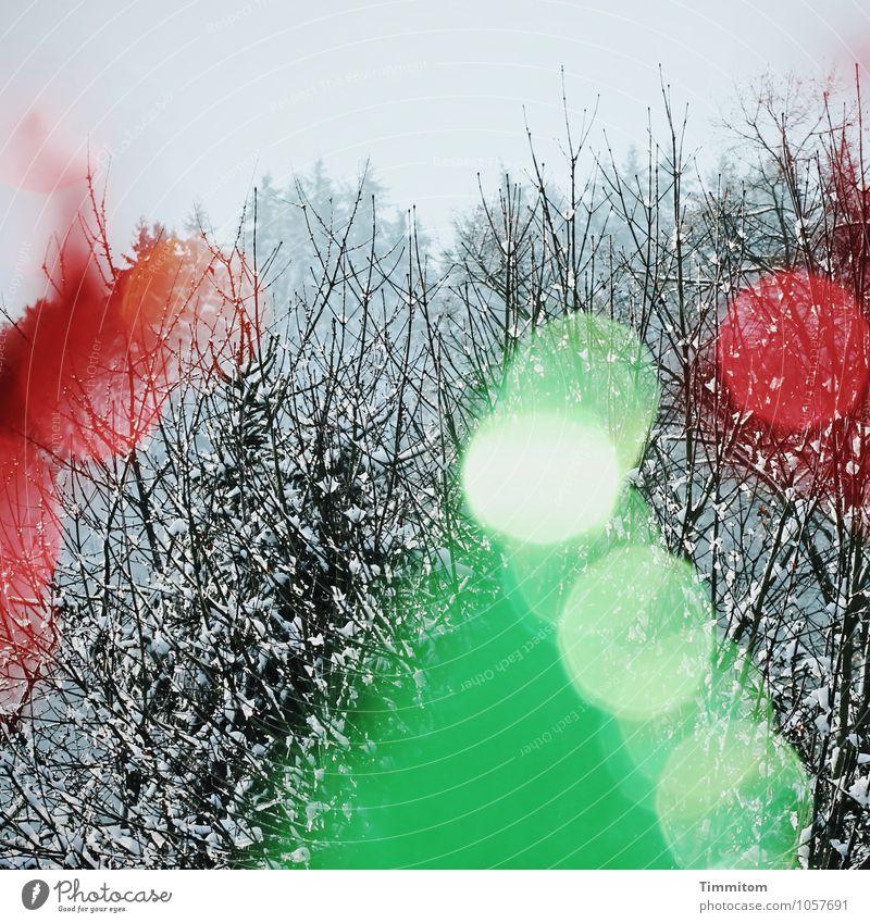 """Karl wiederholt: """"...und übermorgen wieder!"""" Dekoration & Verzierung Umwelt Natur Himmel Baum Wald Fenster Glas Zeichen grau grün rot Gefühle mehrfarbig"""