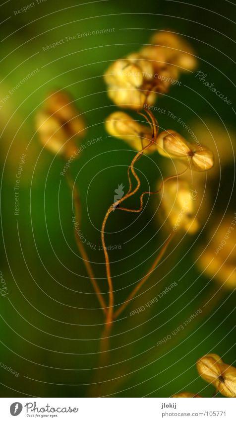 Zittergras Natur grün Pflanze Sommer Wiese Blüte Gras Garten Park Wellen Feld Wachstum Kultur Bodenbelag Lebewesen trocken