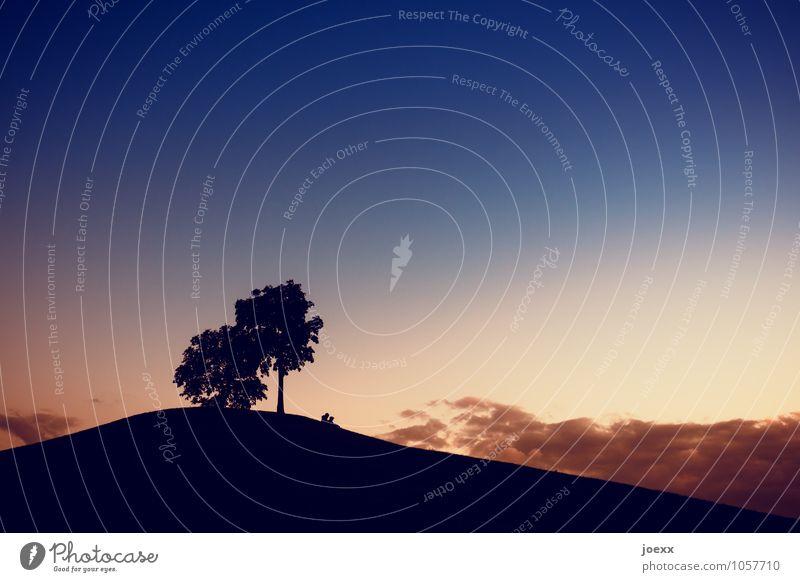 Pärchen sitzt unter Bäumen auf einem Hügel im Gegenlicht Silhouette Freundchaft Liebe Beziehung Freunde Liebespaar reden Dämmerung Romantik Abend Sommerabend