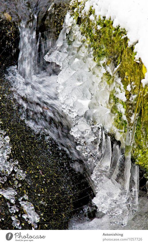 eisig Umwelt Natur Landschaft Pflanze Wasser Winter Wetter Eis Frost Schnee Gras Moos Grünpflanze Fluss Wasserfall Stein frisch hell kalt grün schwarz weiß