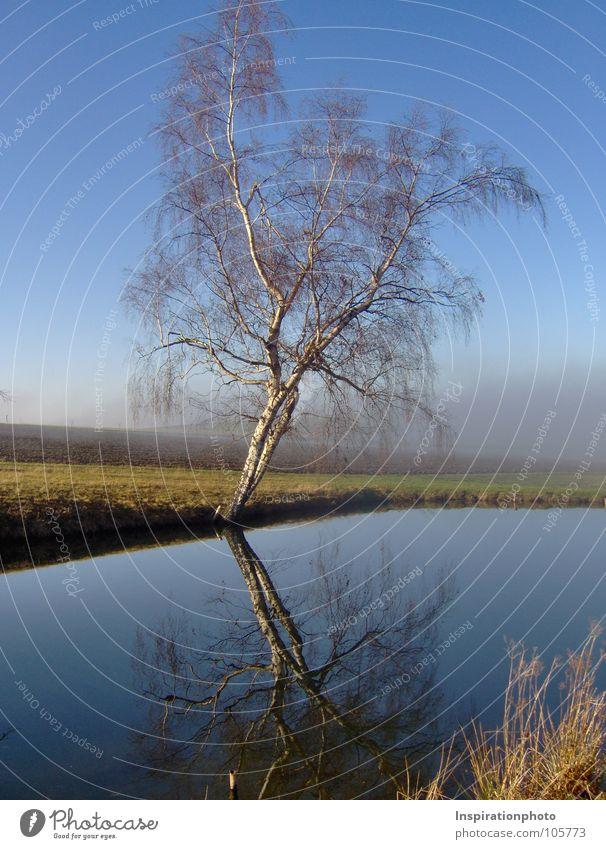 Spieglein, Spieglein ... Baum Blatt See Teich Spiegel Reflexion & Spiegelung Selbstportrait Wolken Nebel Feld Gras Herbst Baumstamm Wasser Ast Zweig Himmel