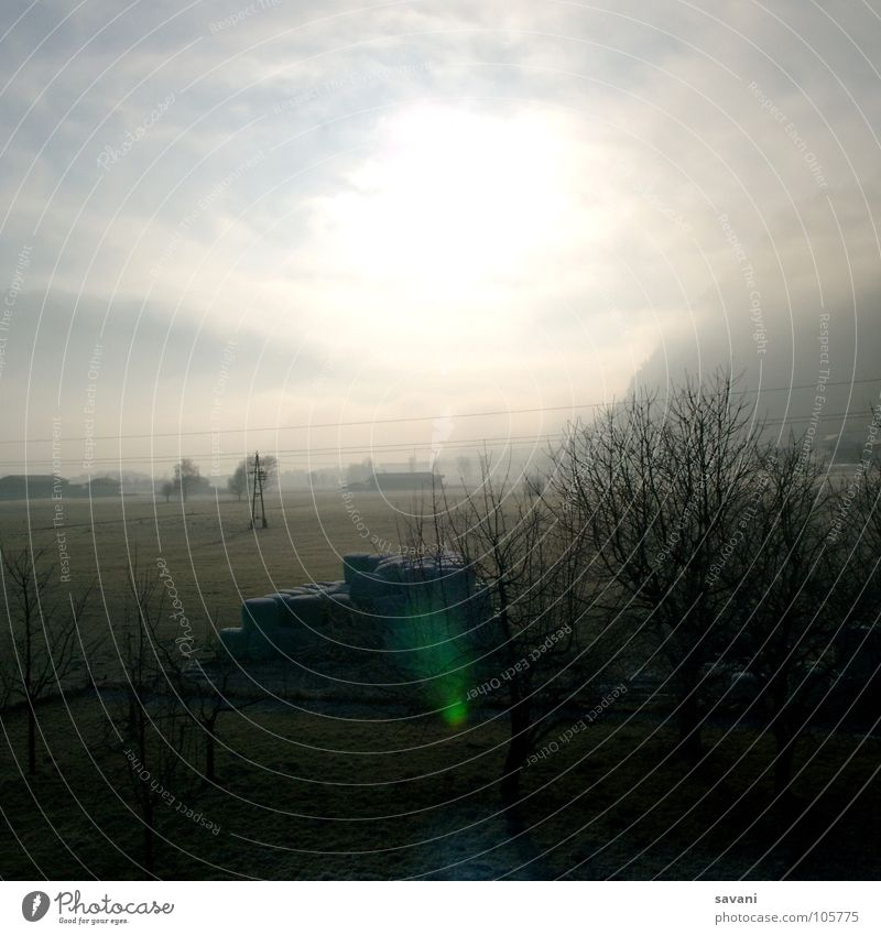 Licht und Gegenlicht! Natur Himmel Baum Sonne Winter ruhig Wolken Einsamkeit kalt Landschaft Feld Nebel Frost Schönes Wetter Strommast Österreich