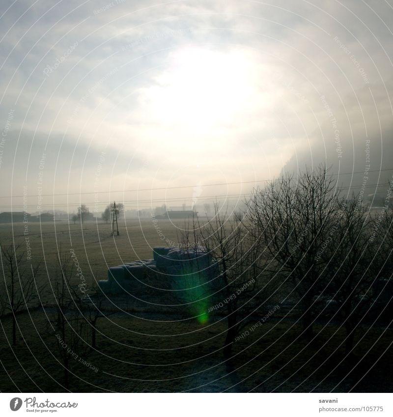 Licht und Gegenlicht! ruhig Sonne Winter Natur Landschaft Himmel Wolken Schönes Wetter Nebel Baum Feld kalt Einsamkeit Österreich Morgennebel Strommast Tal