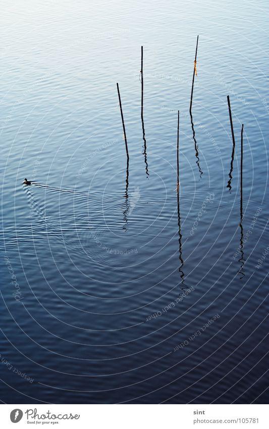 der falle davonschwimmen Natur Wasser alt blau ruhig Tier Erholung See Vogel Fluss Frieden einfach Gelassenheit Bach Stock