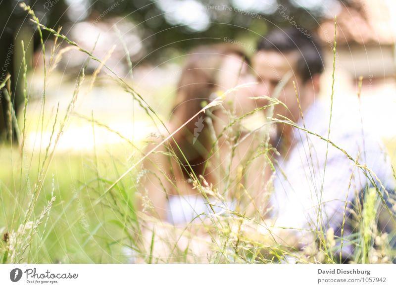 Wiesenromantik maskulin feminin Junge Frau Jugendliche Junger Mann Erwachsene Paar Partner 2 Mensch 18-30 Jahre Natur Frühling Sommer Schönes Wetter Garten Park