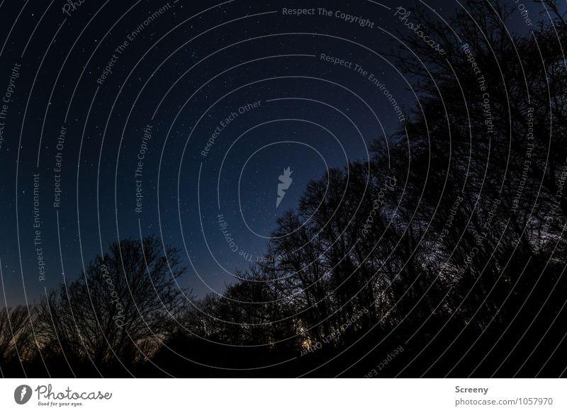 Ruhe und Unendlichkeit Umwelt Natur Landschaft Pflanze Himmel Wolkenloser Himmel Nachthimmel Stern Wald glänzend gigantisch Gelassenheit geduldig ruhig Idylle