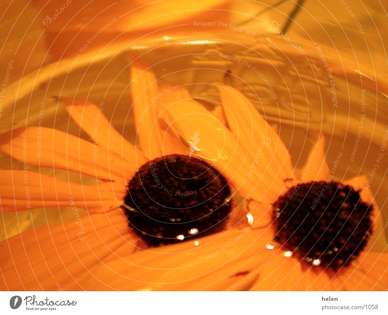 blumendeko Blume Fototechnik